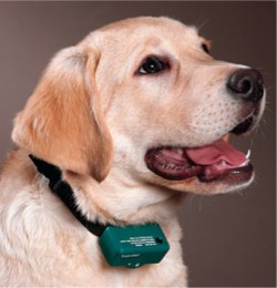 Good And Bad About Shock Collars For Dogs